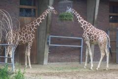 besuch-em-zoo-2010-004