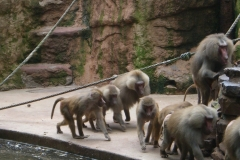 besuch-em-zoo-2010-007