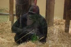 besuch-em-zoo-2010-014