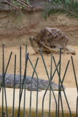 besuch-em-zoo-2010-001