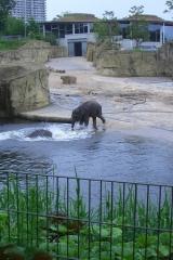 besuch-em-zoo-2010-006