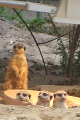 besuch-em-zoo-2010-017