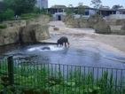besuch-em-zoo-2010-tn-006