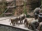 besuch-em-zoo-2010-tn-007