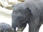 besuch-em-zoo-2010-tn-019